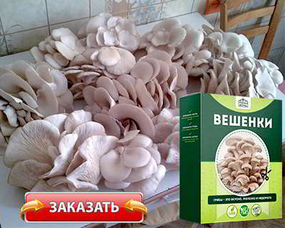Домашняя грибница купить