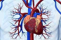 Благодаря VenaHeal улучшается состав крови, нормализуются показатели свёртываемости.
